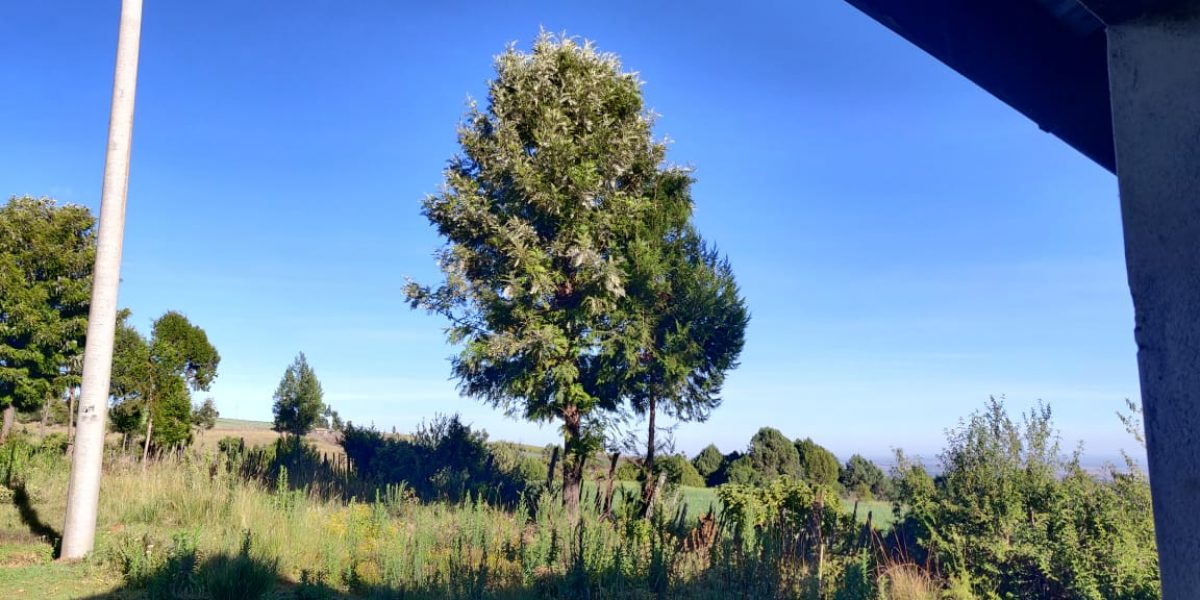 4.25 acres of naturally forested land on the slopes of the Aberdares Nyeri